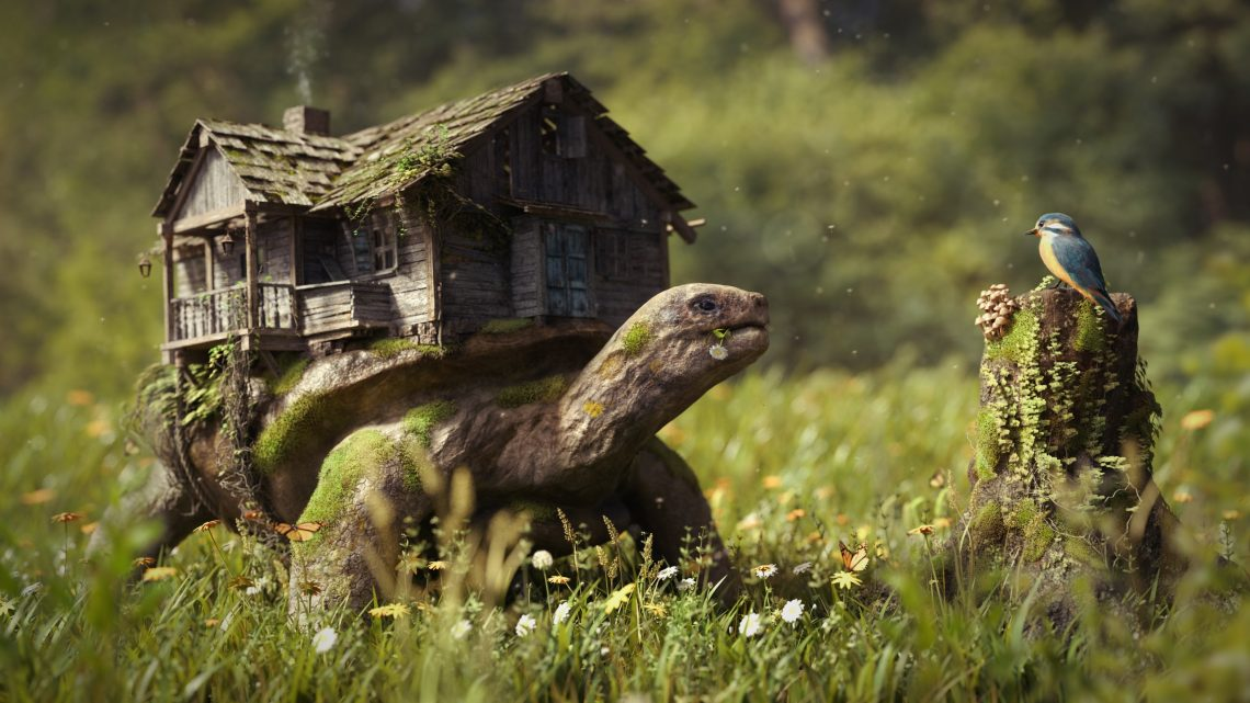 Turtles_Houses_Grass_473930