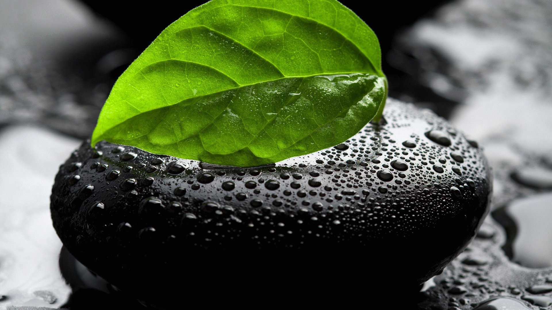 black-stones-leaf-wallpaper-2