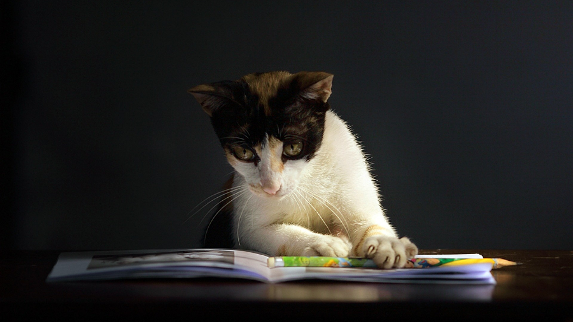 cat-book-curiosity-dark-spotted-1920x1080