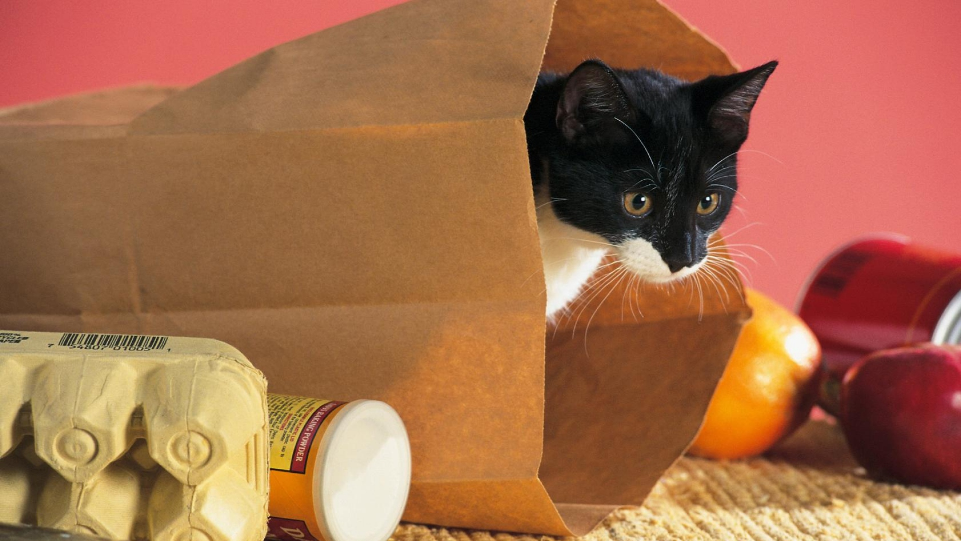 cat-package-food-climbing-curiosity-1920x1080