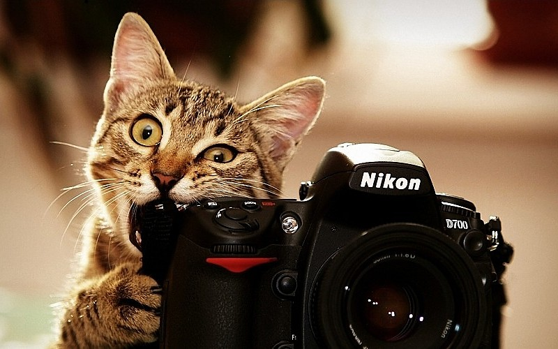 cats-bite-funny-cameras-nikon-kittens-photo-camera-biting-wallpaper-181623