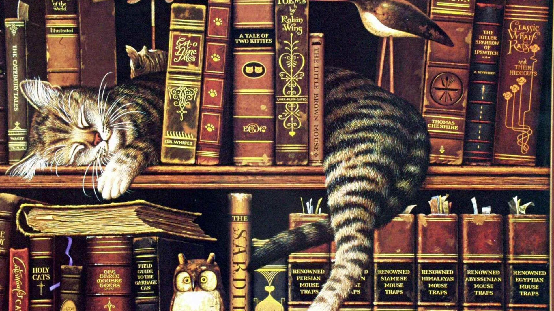 library-cat-sleeping-bookshelf-books-tired-adorable-bird-model-1920x1080