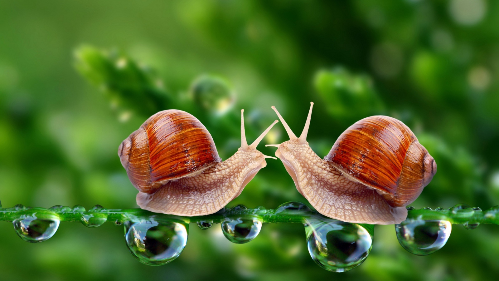 snails-grass-shell-1600x900