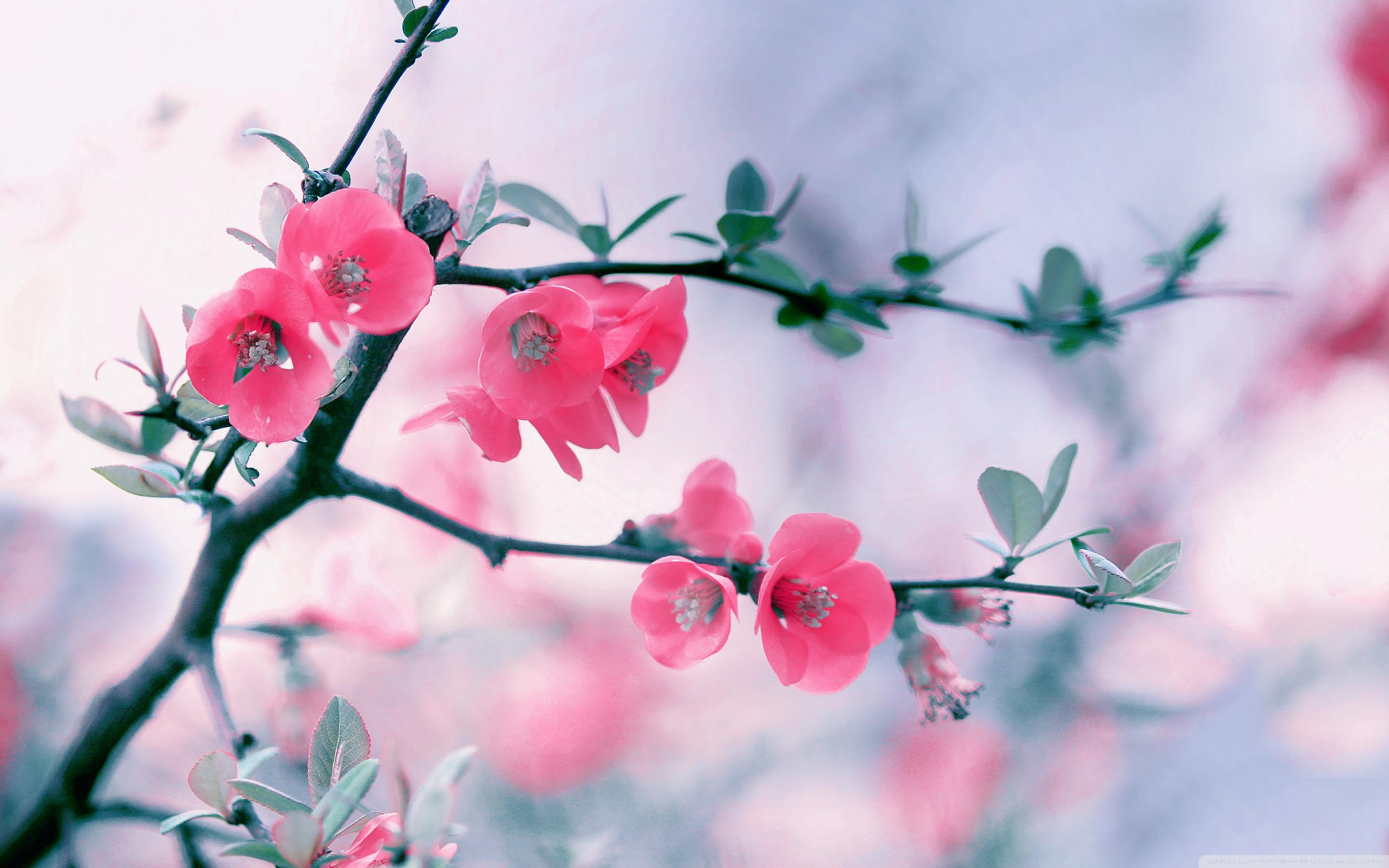 spring-flowers-wallpaper-for-desktop-14-hd-wallpapers-planezen-com