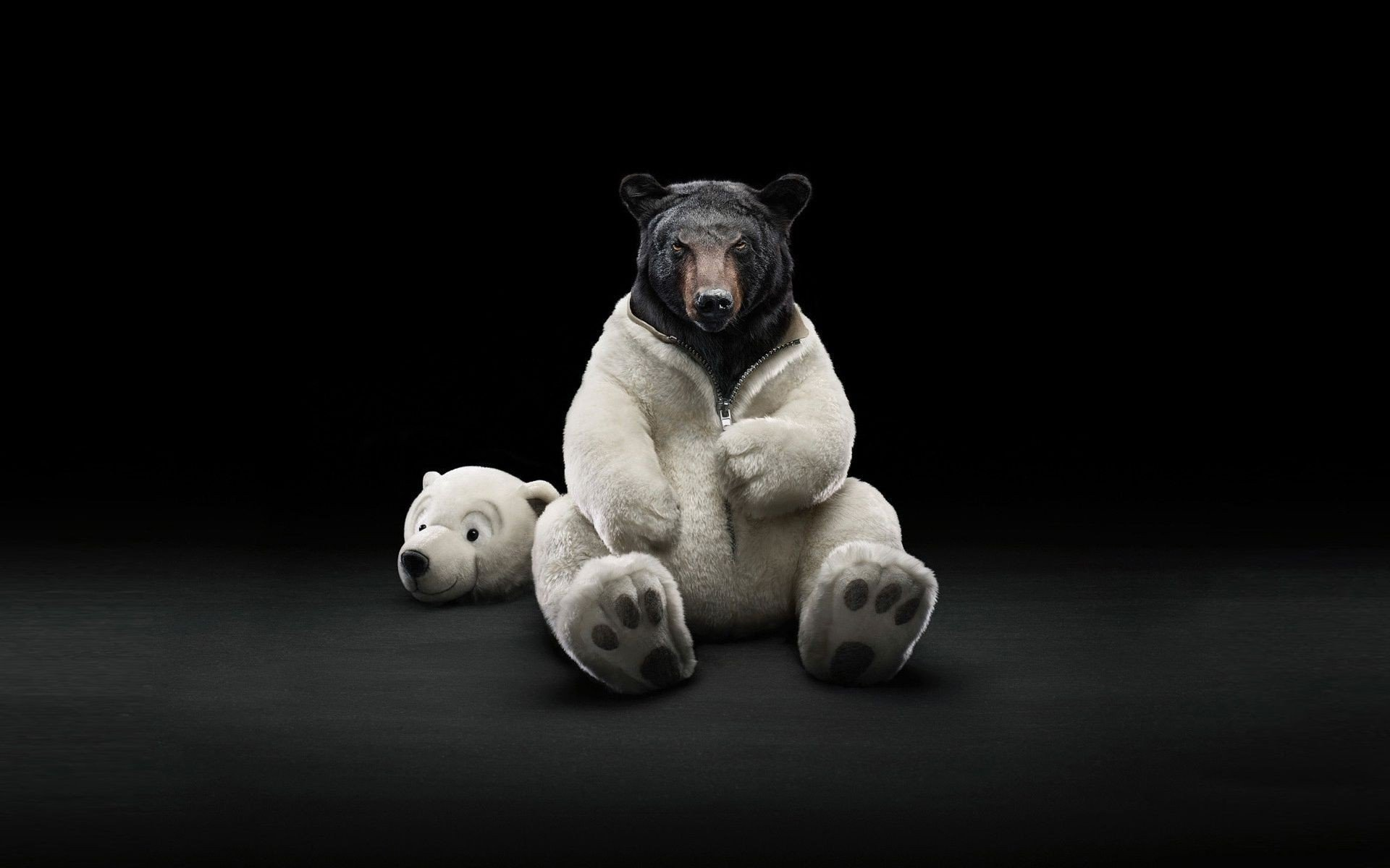 costume-bears-polar-bears-black-bear-wallpaper-1