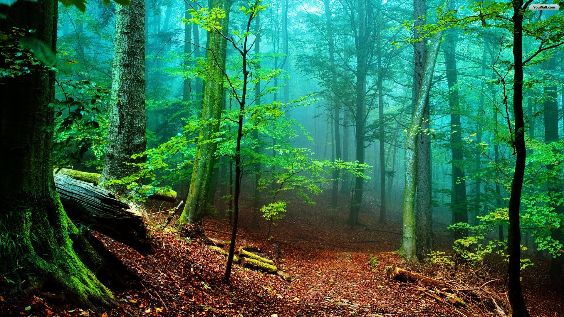 NatureWallpaperHD_nature-forest-hd-wallpapers-02