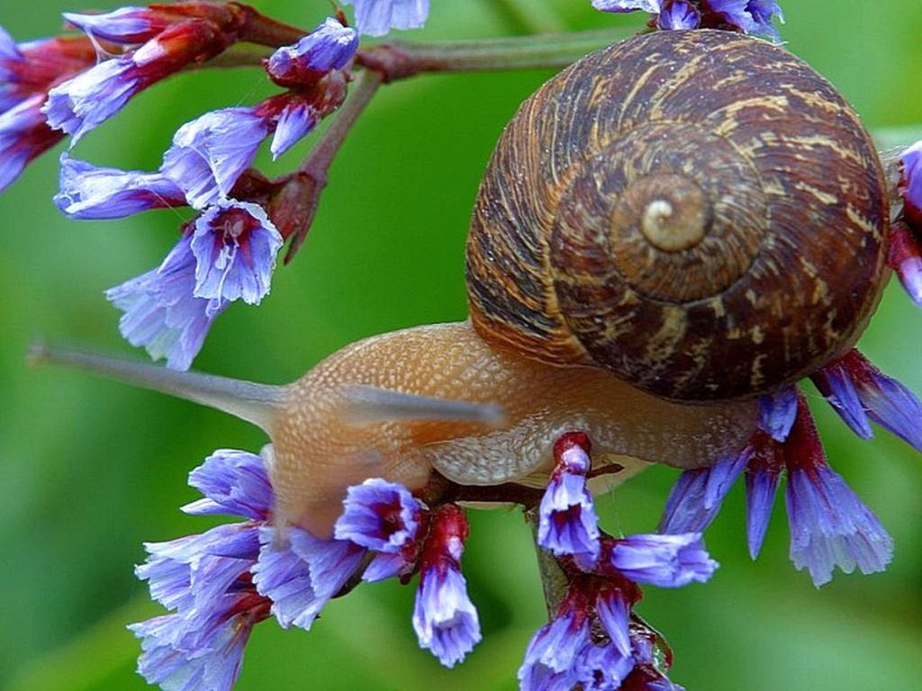 snail-on-flowers