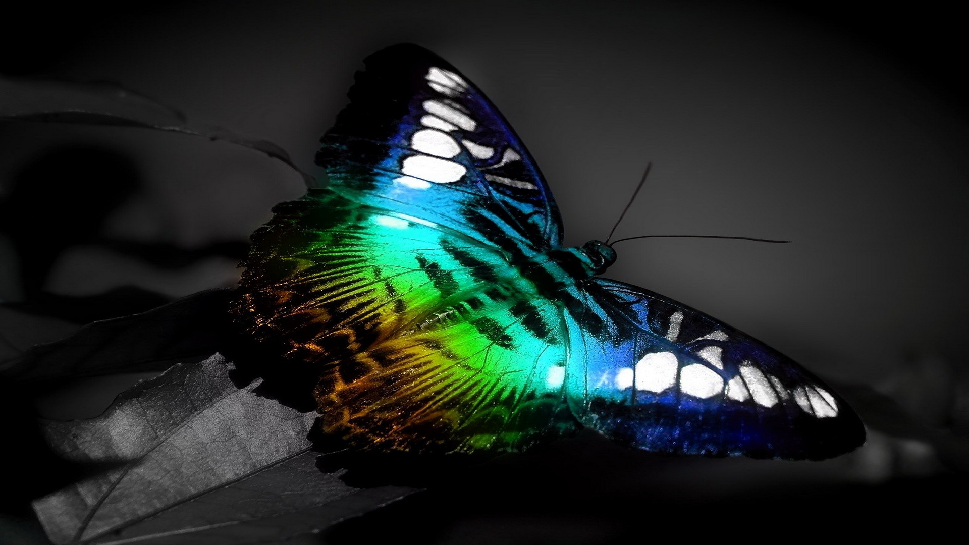 Colorful-Butterfly-3d-Hd-Wallpaper